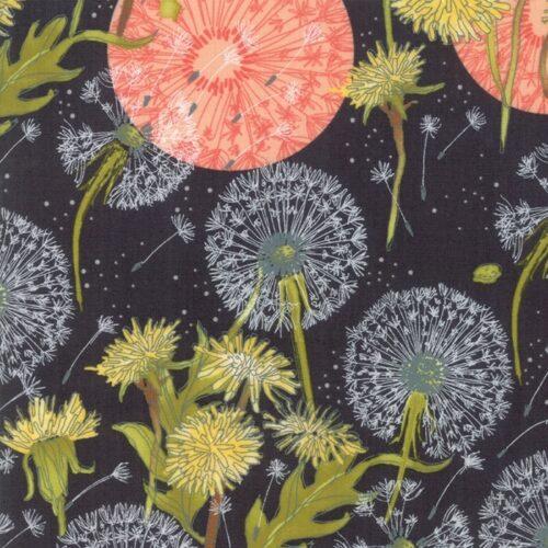 Quiltstof van Robin Pickens.Moderne stof, grote roze bloem op zwarte achtergrond