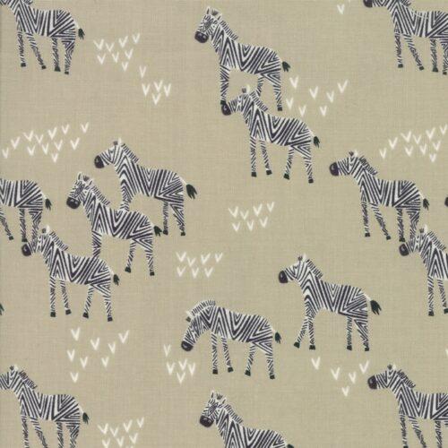 safari life giraffes