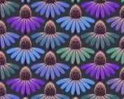 Echinacea amethyst PWAH075.amethyst. Grote paarse bloemen met blauw-groene-roze accenten. Ontwerp Anna Maria Horner voor Free Spirit.